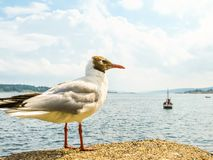 Seacoast of the Oslo Fjord, Norway. Landscape of Norway fjord on summer day Royalty Free Stock Photos