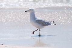 Seagull on beach Stock Photo
