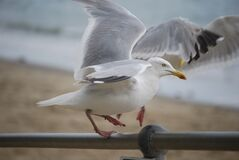 Seagull by beach