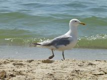 Seagull on the beach against the sea stock photo