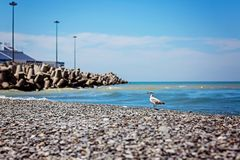 Gull and sea Royalty Free Stock Images