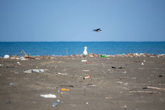 Seagull on a beach, ecological disaster, extinction of birds, na Stock Photo