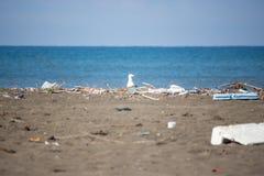 Seagull on a beach, ecological disaster, extinction of birds, na Stock Photos