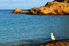 Seagull on the beach in the evening Royalty Free Stock Images