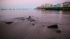 Seagull on beach stock footage