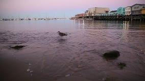 Seagull on beach stock video footage