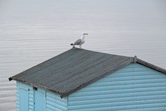 Seagull on beach hut Royalty Free Stock Photo
