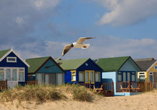 Seagull and Beach Huts. A gull flying in front of some colourful beach huts on a sandy beach Royalty Free Stock Photo