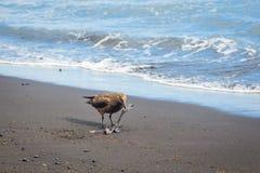 Seagull on the beach Stock Photography