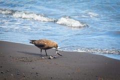 Seagull on the beach Royalty Free Stock Photos