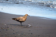 Seagull on the beach Stock Photos