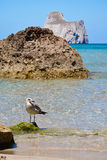 Seagull on the beach Stock Photo