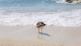 Seagull at the beach of Paxos Ionian islands Greece. Famous greek summer destination stock video