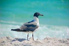 Seagull on beach. Seagull on sandy beach Royalty Free Stock Photo