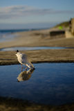 Seagull on beach Royalty Free Stock Image