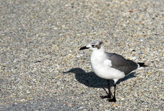 Seagull on Beach Royalty Free Stock Photo