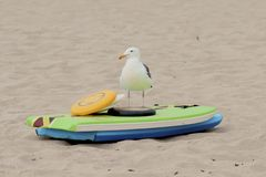 Seagull on the beach standing in front of colorful beach toys Stock Photo
