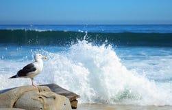 Seagull on beach Stock Photos