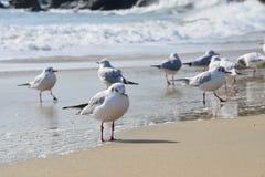 Seagull Beach Stock Photography