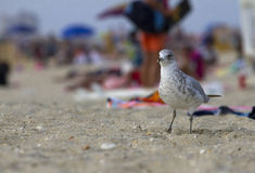 Seagull on beach Stock Photos