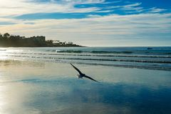 Seagulls flying over the beach before sunset time stock image