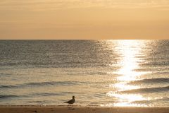 Seagull - Baltic Sea - Usedom Island royalty free stock images