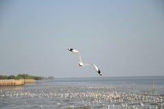 Seagull beautiful Stock Photo
