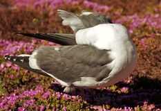 Seagull. In a bed of flowers Royalty Free Stock Photography