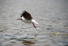 Seagull bierze daleko obrazy stock