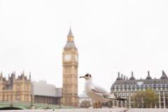 Seagull and a Big Ben Royalty Free Stock Photos