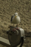 Seagull on binoculars Royalty Free Stock Photography