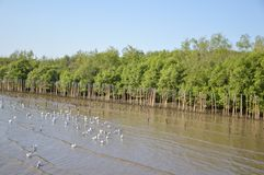 Seagull bird at Bang Pu beach Royalty Free Stock Image