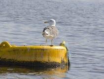 Seagull bird on buoy water Royalty Free Stock Photo