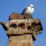 Seagull bird old building Stock Images