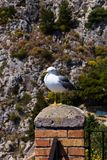 A seagull bird sits on a balcony against the background of the rocks - a travel or natural background. A seagull bird sits on a balcony against the background Stock Images