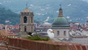 Seagull bird sitting on the fort wall with a city centre on background. SAVONA ITALY - MAY 7 2017: Seagull sitting on the fort wall with a city centre on stock footage