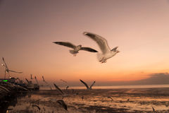 Seagull bird with sky and sea on sunset time. Seagull bird with sky and sea at sunset time Stock Photo