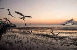 Seagull bird with sky and sea at sunset time. Seagull bird with sky and sea sunset time Stock Images