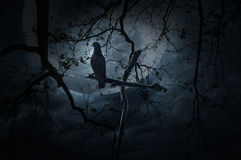 Seagull bird stand on wood cross over dead tree, moon and cloudy Stock Photography