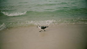 Seagull bird takes off flying over Pacific Ocean. Slow motion. stock footage
