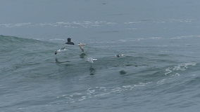 Seagull Birds Flying Over a Big Ocean Wave. A Flock of Seagull Fly Low Over A Big Wave that is Breaking off of the Coast of Santa Cruz, California, USA.  Filmed stock footage