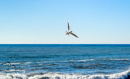 Seagull birds flying over the sea, fighting for fish rests Stock Image