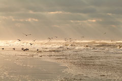 Seagull birds over sea waves at sunset Royalty Free Stock Photos