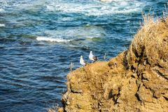Seagull birds standing on the hill on sea background. Image of white and gray seagulls sitting on the beach. Seagull birds standing on the hill on sea background stock image