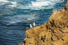 Seagull birds standing on the hill on sea background. Image of white and gray seagulls sitting on the beach. Seagull birds standing on the hill on sea background royalty free stock photos