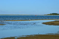 Seagull on the blue background of the river cleans the feathers. A warm summer day royalty free stock images