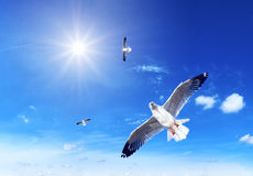 Seagull on blue background Royalty Free Stock Photography