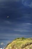 Seagull in blue sky Stock Photos