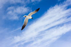 Seagull in blue sky Royalty Free Stock Photography