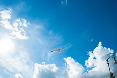 Seagull with blue sky and some clouds as background royalty free stock photography